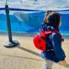 【裏ワザ】アソビュー!のGo To利用で京都水族館の年間パスをお得にゲットする方法