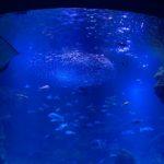 【お得】京都水族館の年間パスポート優待まとめ