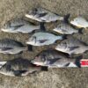 【紀州釣り】久しぶりの淡路島で紀州釣り!2回の釣果をまとめて報告します!
