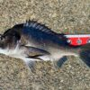 【紀州釣り】淡路島の車中泊で紀州釣りを楽しむためのコツ3選