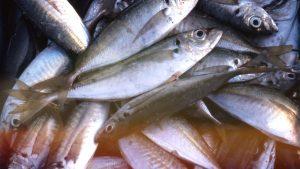 初めて淡路島で釣りをする時にオススメの釣具屋・エサ屋 厳選3店